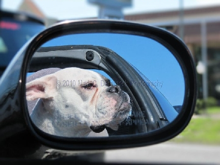 Mark Demshock Photography boxer in sideview mirror
