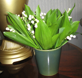 lilies from Hokkaido