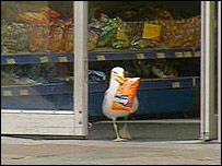 The Scottish Seagull and his Doritos (BBC photo)