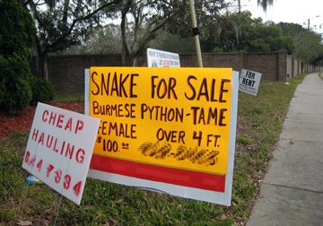 Snake for Sale sign
