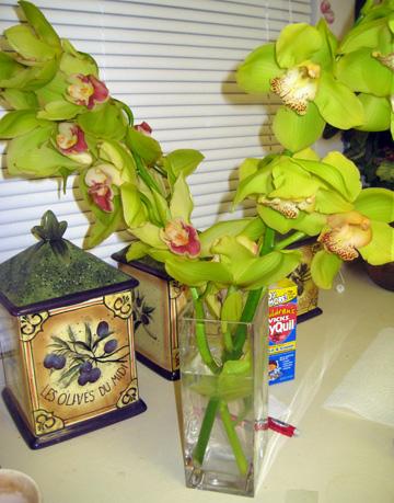 Vera Wang signature orchids